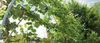 Tuinen Mutton - Bertem - Tuinonderhoud